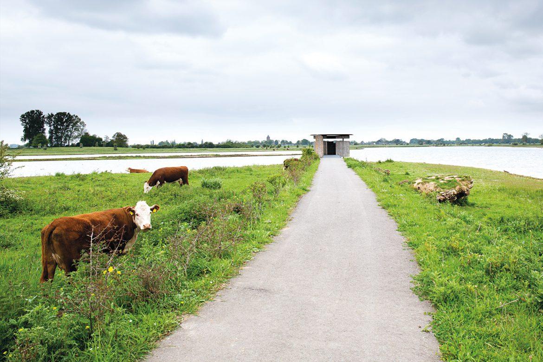 IJssel-identiteit